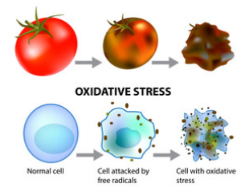 Oxidative stress illustration